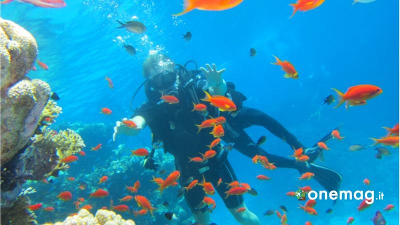 Viaggio in Egitto, le destinazioni imperdibili, diving in Mar Rosso