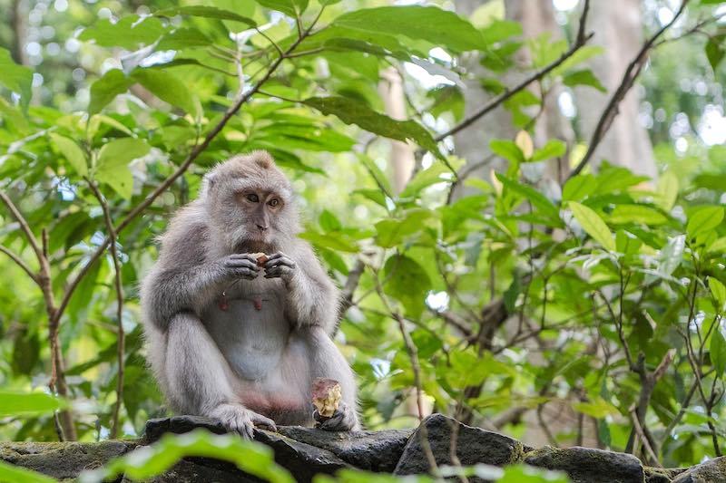 Foresta delle scimmie, Ubud