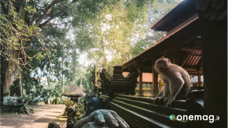 Ubud, Sacred Monkey Forest