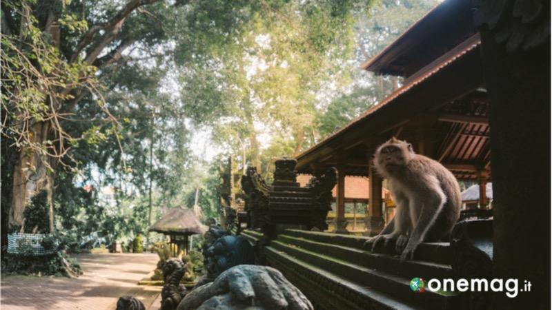 Ubud, Sacred Monkey Forest
