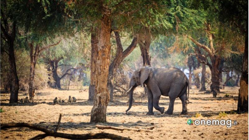 Parco Basso Zambezi