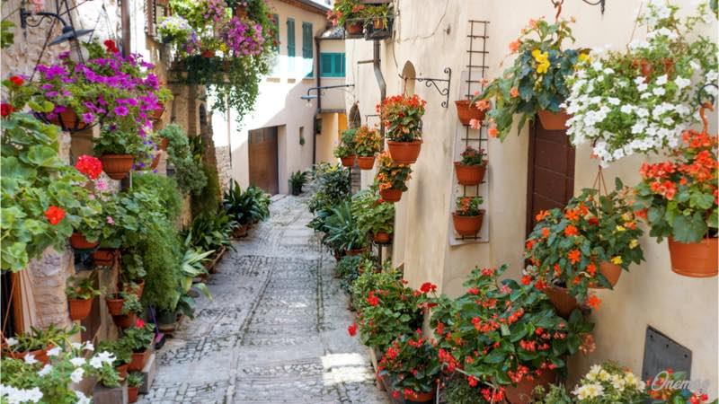 Spello, la strada con i fiori