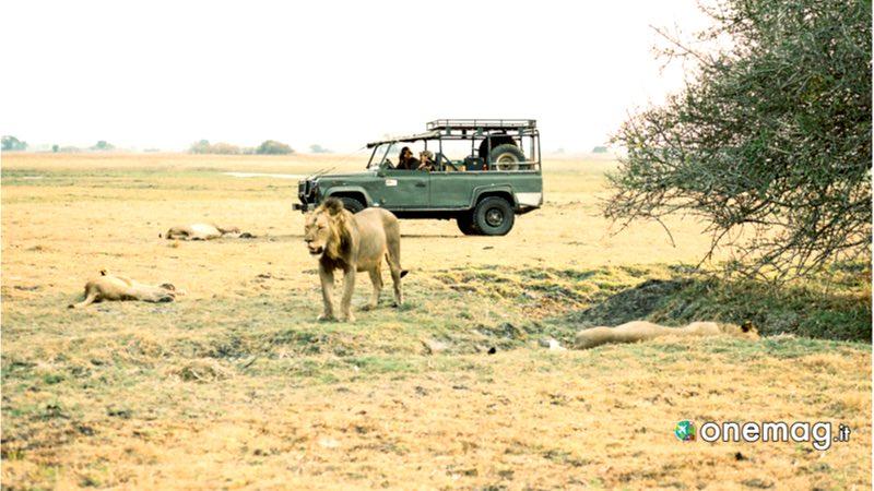 Zambia, Parco nazionale del Kafue