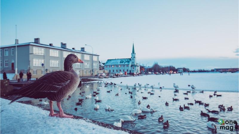Cosa vedere a Reykjavík
