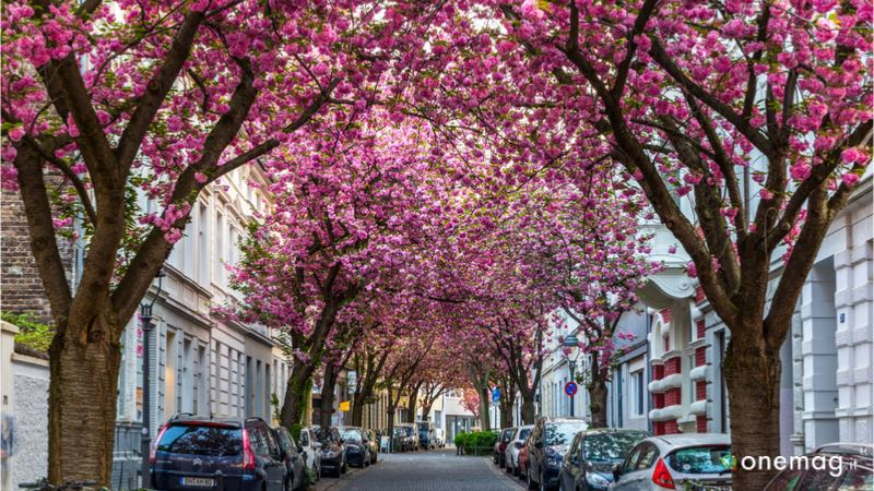 Cosa visitare a Bonn, Heerstrasse