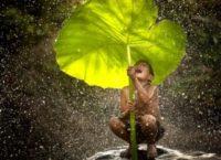 Le avventure nella natura della Cambogia