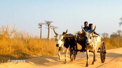 Guida del Madagascar, mezzo di spostamento