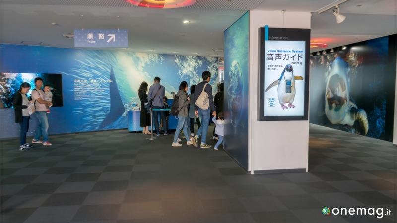 Acquario Kaiyukan di Osaka, ingresso