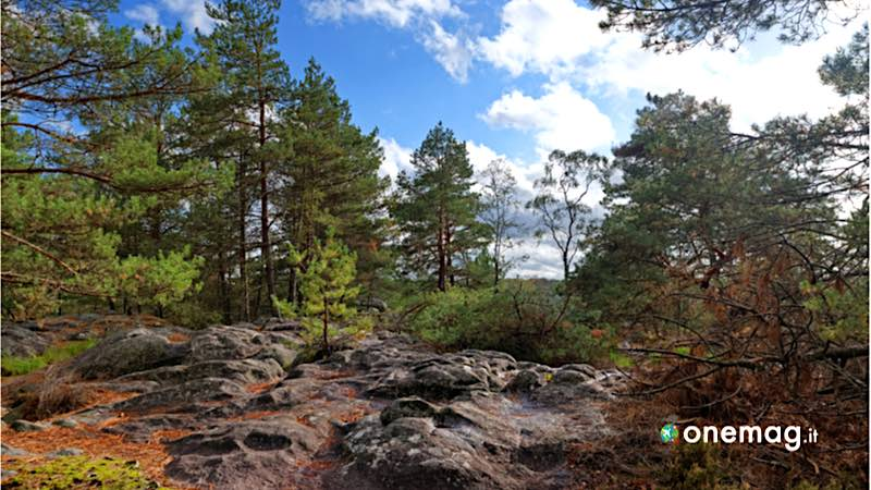 Fontainebleau-foresta