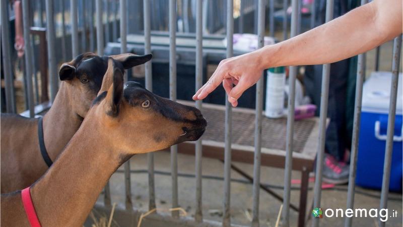 Lo zoo di Sacramento, animali accarezzati