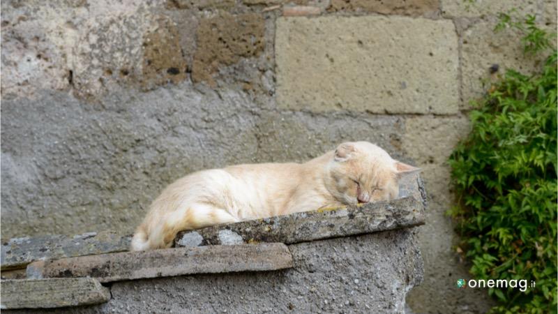 Cosa vedere a Calcata, gatto che riposa
