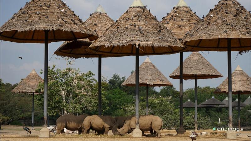 Le riserve naturali dello Swaziland, Hlane Royal National Park