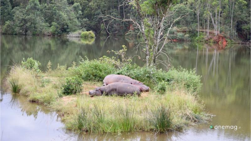 Le riserve naturali dello Swaziland, Mlilwane Wildlife Sanctuary