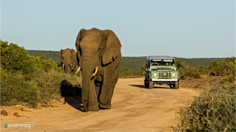 Viaggi per immagini in Africa, safari
