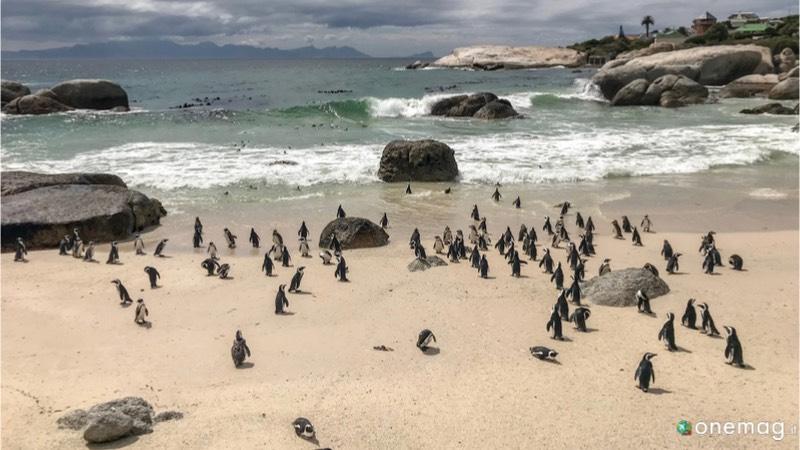 Viaggi per immagini in Africa, pinguini