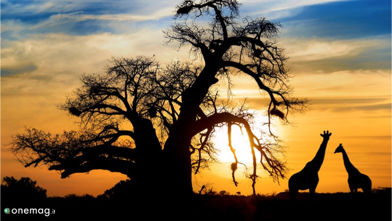 Viaggi per immagini in Africa,