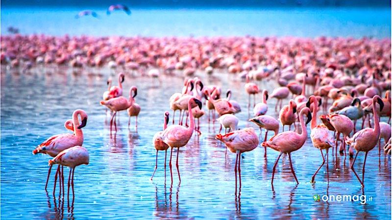 Safari in Africa, Lake Nakuru National Park