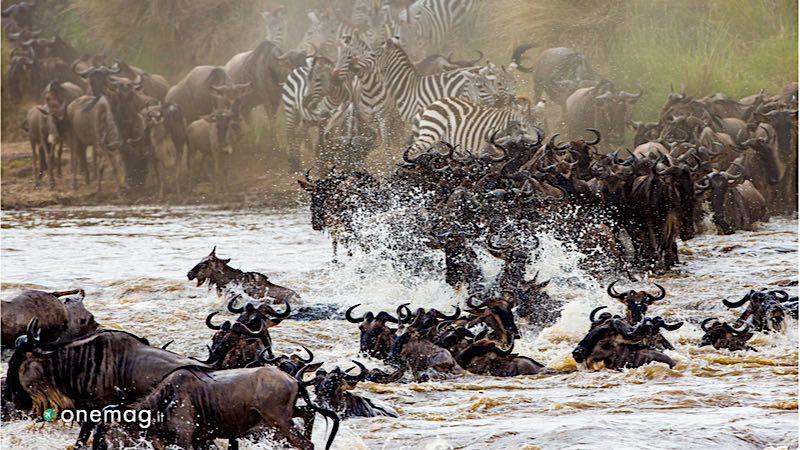 Safari in Kenya, il Masai Mara