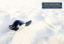 Akumal, la baia messicana delle tartarughe