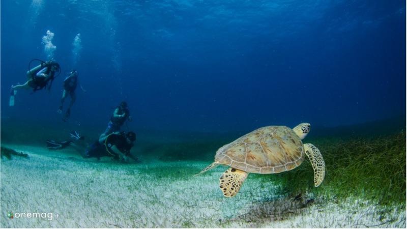 Cosa visitare ad Akumal, tartarughe marine
