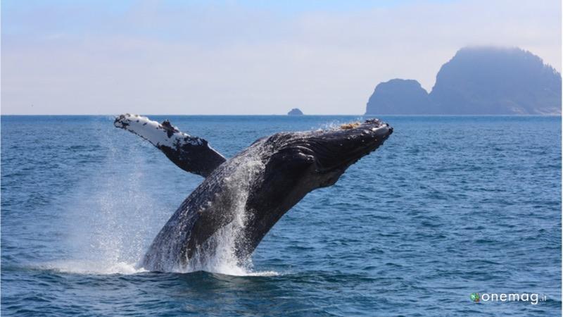 Crociera in Alaska, orche marine