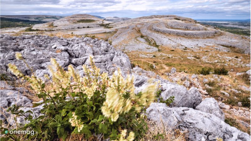 Il Burren National Park in Irlanda