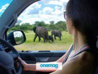 Safari in Africa, ecco cosa sapere