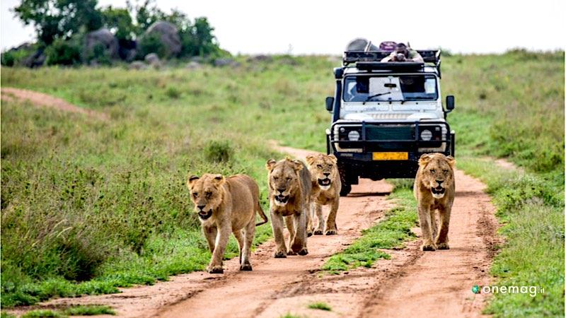 Safari in Africa, Kenya