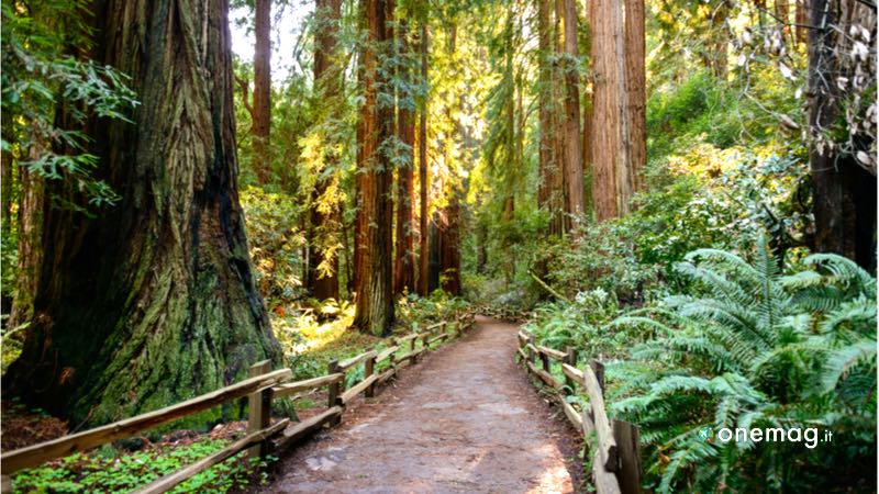 10 cose da vedere a San Francisco, Muir Woods National Monument