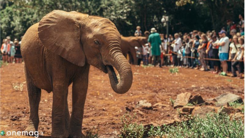 Le 10 cose da vedere a Nairobi, il Safari Walk