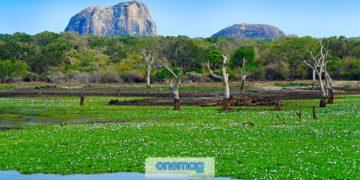 Parchi Nazionali dello Sri Lanka, safari e avventure