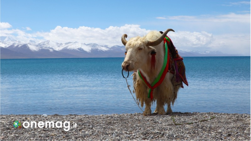 Visitare Lhasa, cosa vedere nella capitale del Tibet, il lago Namtso