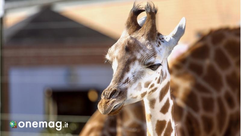 Aalborg, cosa fare e cosa vedere, lo zoo
