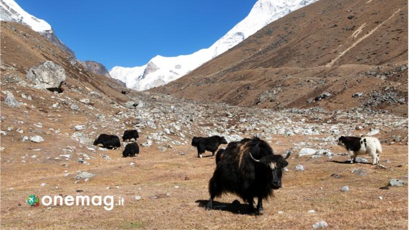 Visitare i parchi nazionali in Nepal, Makalu-Barun