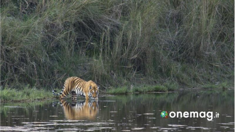 Visitare parchi nazionali in Nepal, la Riserva naturale di Suklaphanta