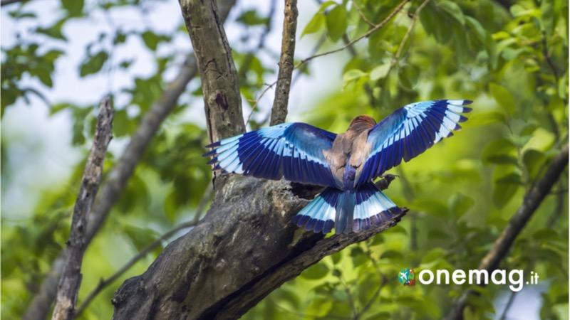 I 10 migliori parchi nazionali del Nepal, il parco reale di Bardia