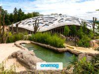 A spasso nello zoo di Zurigo