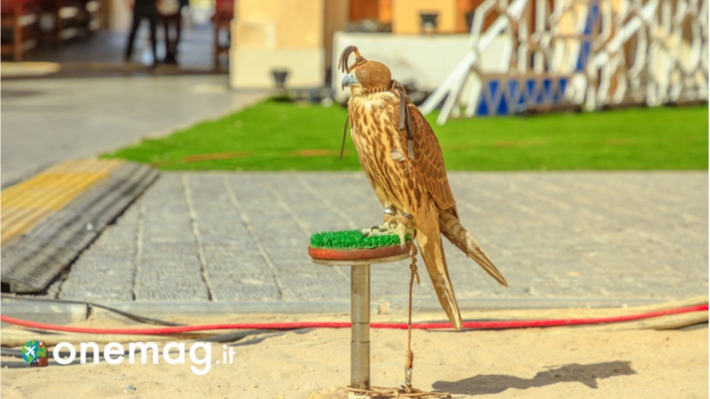 Cosa vedere a Sharjah, Arabian Wildlife Centre