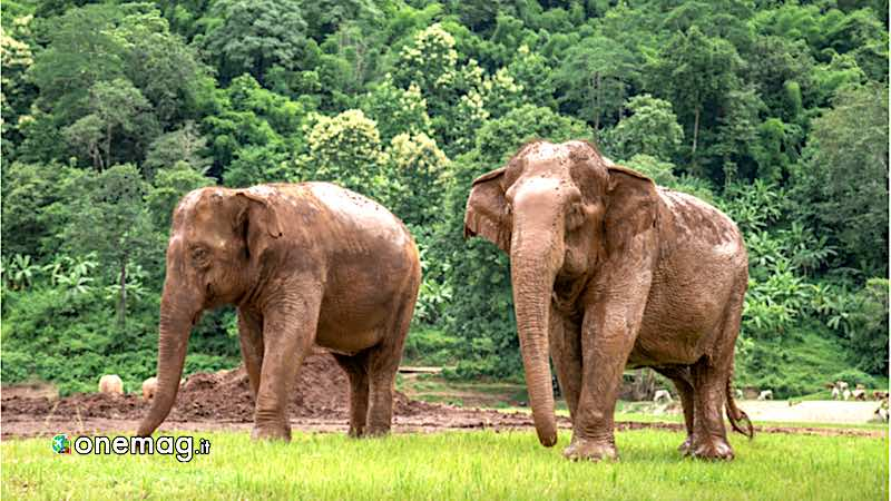 Cosa vedere a Chiang Mai, Elephant Nature Park