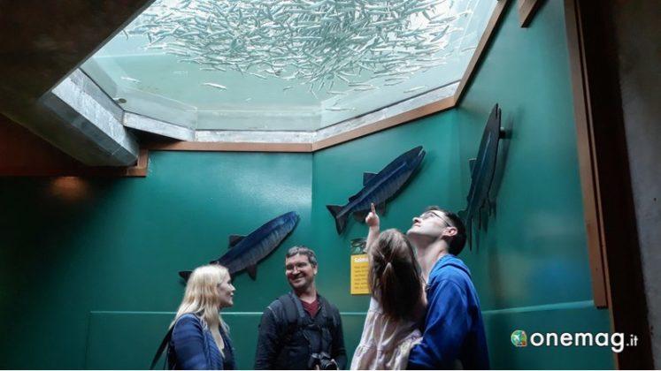 Acquario di Seattle