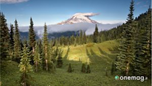 Natura del Parco Nazionale Mount Rainer