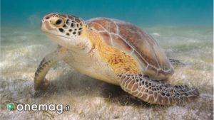 Akumal, la baia delle tartarughe