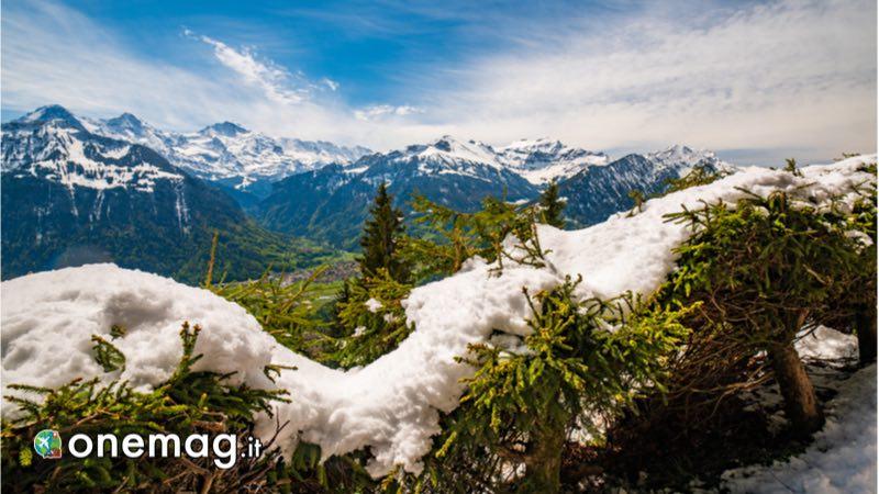 Cosa vedere a Interlaken, veduta dei boschi che circondano la città