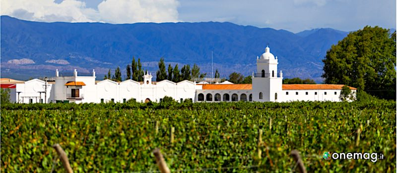 Vines of Mendoza, Mendoza
