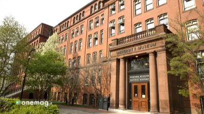 Cosa vedere a Boston, Museo di storia naturale di Harvard