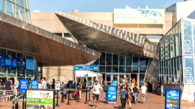 Cosa vedere a Boston, New England Aquarium
