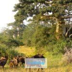 Parco Nazionale Kissama, Angola