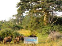 Parco Nazionale di Kissama, guida all'incontaminato territorio dell'Angola