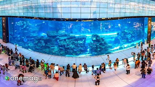 Gli acquari più belli del mondo