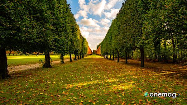 Il bosco di Champs-sur-Marne